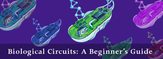Biological Circuits: A Beginner's Guide