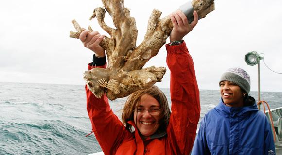 Isidid coral